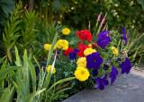 Fleurs et plantes/Flowers and Plants 2010