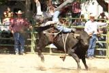 South Douglas Rodeo, Bull Riders 2010