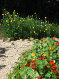 Psychedelic  Veg Gardening, June 2010