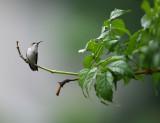 HummingBird2009-4.jpg