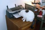 How do you explain a printer to a cat???