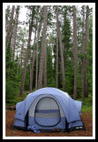 Tent and Tall Trees