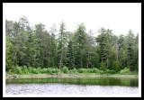 Voyageur Island Trees