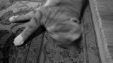 Idle Paws