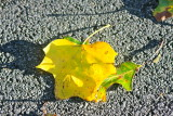 Lonely Yellow