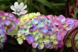 I love flowers...