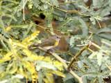 Mixed Plants and Birds of Arizona