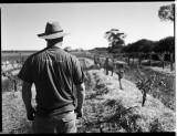 Last of The Summer Wine, Barossa SA 2008