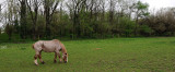 Horse in field - Eugene IN