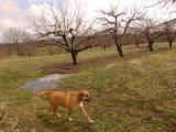Indiana Guard Dog