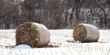 Iowa Hay Bales