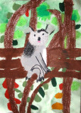 koala, Christina, age:5.5