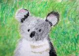 koala, Callum, age:8