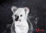 koala, Janice, age:12