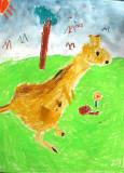 kangaroo, Jaydon, age:6.5