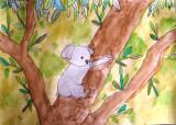 koala, Yu Jin, age:7