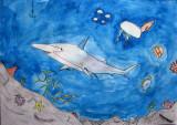shark, Longy, age:11