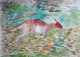 kangaroo, Tony, age:8