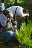 The Annual Spring Fern Shoot