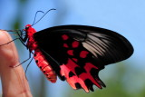 F3--Butterfly Farm, St Martin