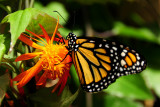 F9--Butterfly Farm, St Martin