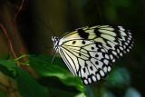 F11--Butterfly Farm, St Martin