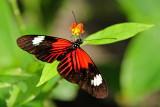 F19--Butterfly Farm, St Martin