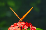 F21--Butterfly Farm, St Martin