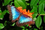 F26--Butterfly Farm, St Martin