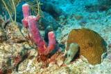 H3--Underwater St Maarten, Gregory site, tube sponge