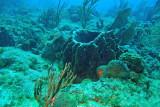 H11--Underwater St Maarten, Gregory site, barrel sponge