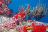 H18--Underwater St Maarten, Liedmar Wreck site
