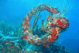 H74--Underwater St Maarten, Proselyte Reef-Wreck, anchor