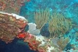 H78--Underwater St Maarten, Proselyte Reef-Wreck, anchor