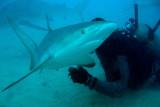H98--Underwater St Maarten, Shark Awareness DIve