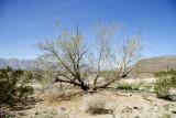 Borrego Desert/Ocotillo Wells CA