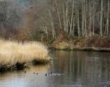 Cowichan River Scene
