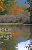 Fall Colours at the Slough