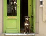 Dog-green door & my