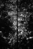 tree fern - relief