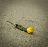 In Memoriam: Ashes Gone, Flowers Remain I
