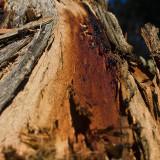 Scar (Detail)