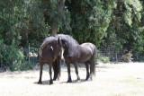 Horsecamp09