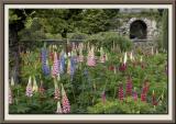 The Lupin Garden