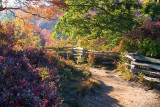 Graveyard Fields Trail 3