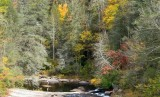DuPont State Forest 6
