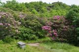 Craggy Gardens 12