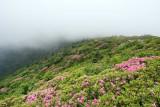 Roan Mountain 10