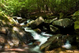 Bearwallow Creek - Nantahala NF 1