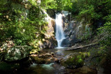 Bearwallow Creek - Nantahala NF 3